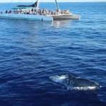 23m-Katamaran-Delphin2